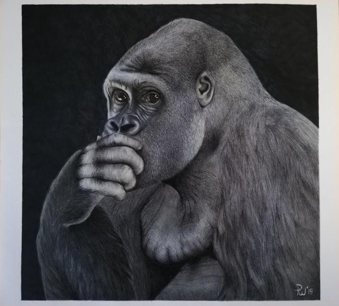 Tekening gorilla