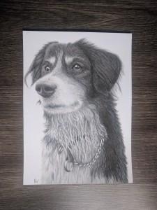 hond-15