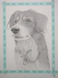 hond-7